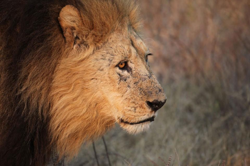 Delta lion  by Steve Jurvetson