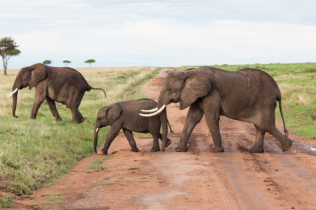 Elephants  by Matt Biddulph