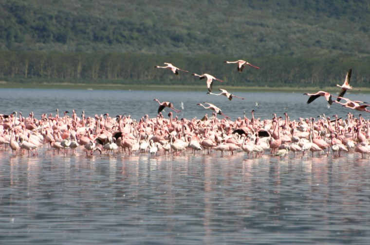 Lake Nakuru image