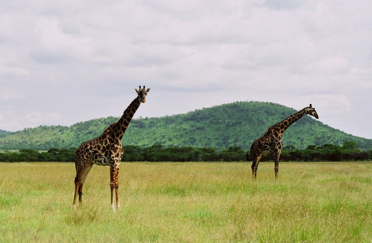 Serengeti Image
