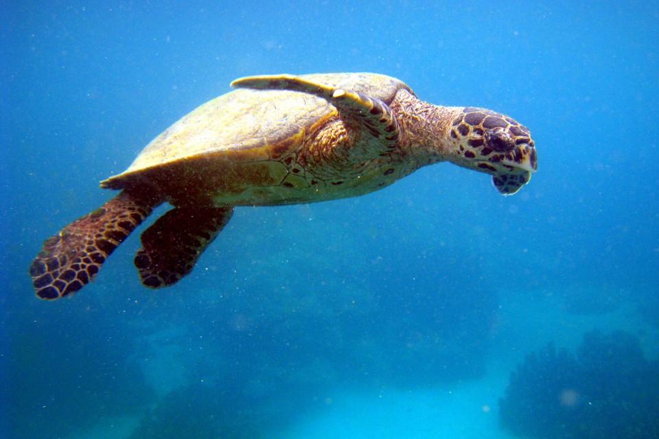 Madagascar turtle