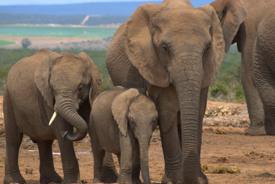 Addo elephant  by Brian Ralphs