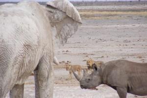 Elephant, rhino and lions in Etosha