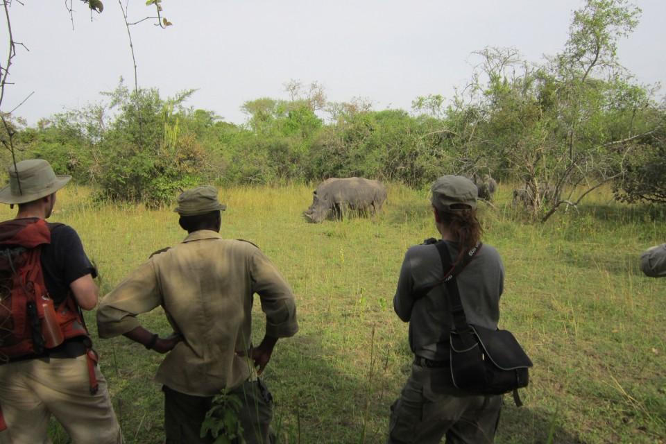 Ziwa rhino walk