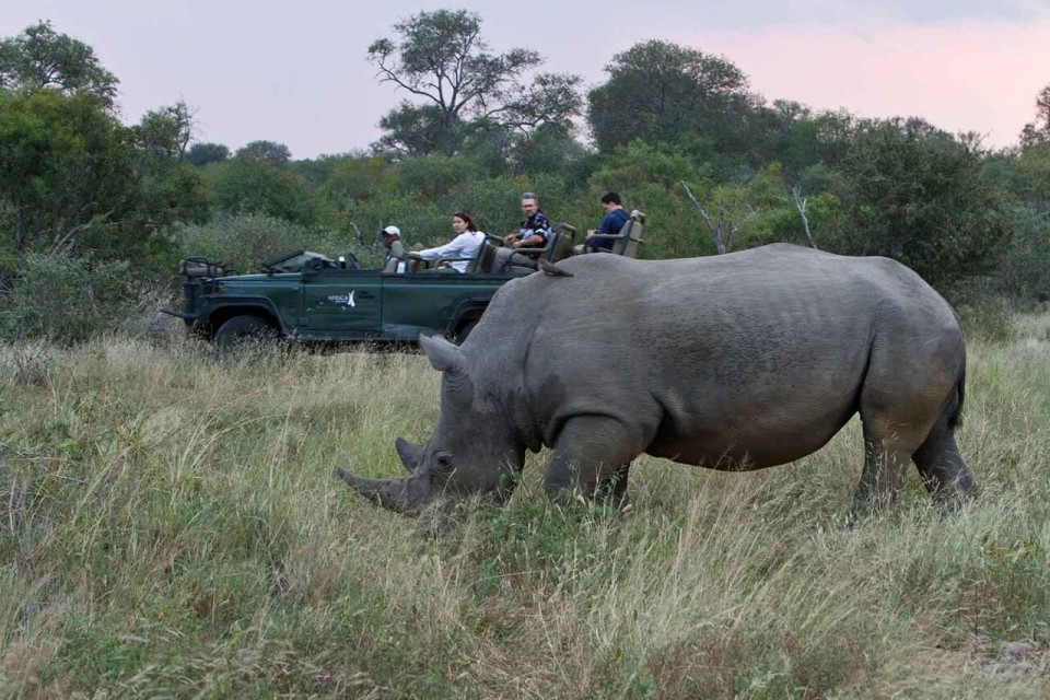 Rhino on game drive