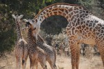 South Luangwa National Park & Lake Malawi Safari