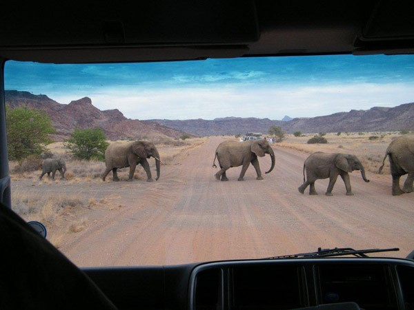 Great trek adventure day 11   damaraland desert elephants