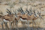 Great trek adventure day 5   kgalagadi game drives