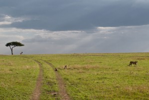 Serengeti plain by Víctor Iniesta