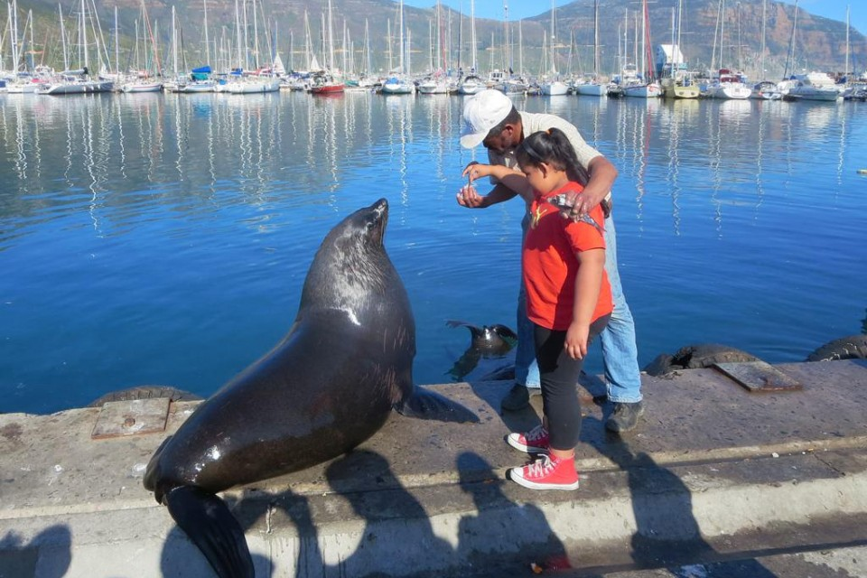 Fur Seal, Hout Bay  by David Stanley