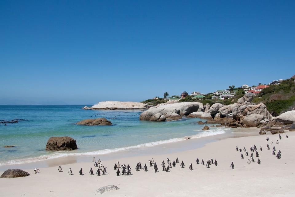 Penguins on Boulders Beach  by Bas Leenders