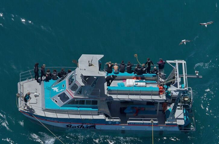 Boat  large