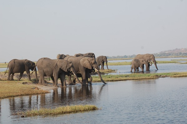 Chobe River cruise