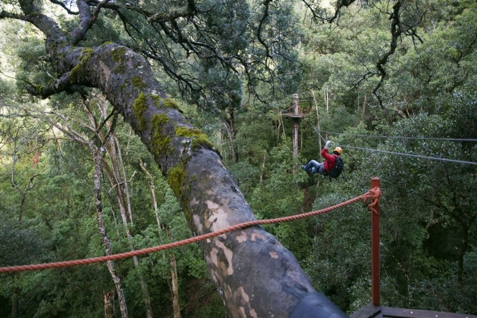 Treetop Tour Tsitsikamma Forest  by South African Tourism