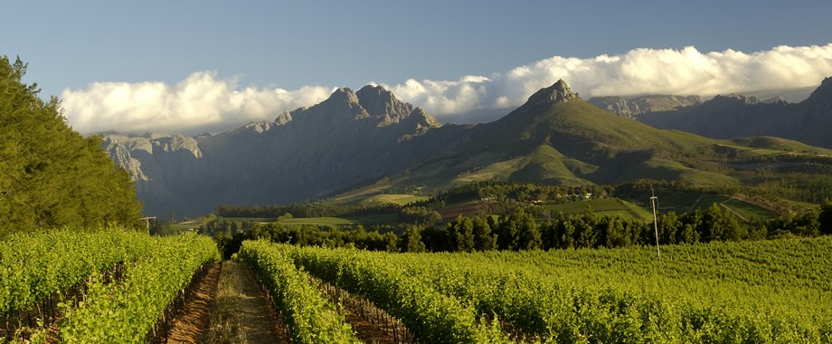 Cape Wine Route