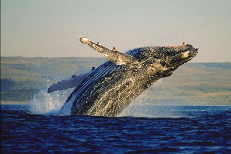 Cape Whale Route
