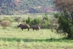 Pilanesberg & Sun City Self Drive Tour Package