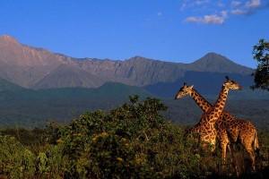 Mount Meru & giraffes