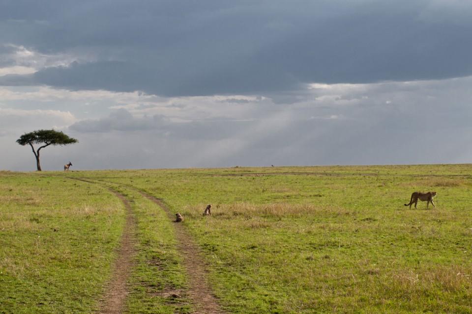 Serengeti plain  by Victor Iniesta