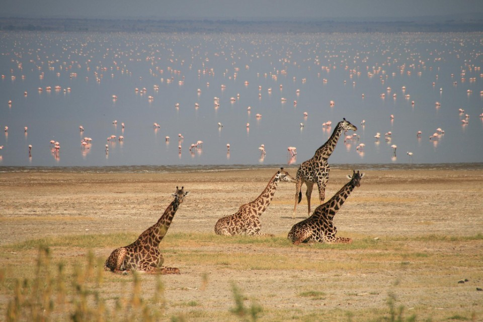Lake Manyara  by Marc Veraart