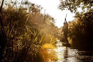 Delta mokoro safari