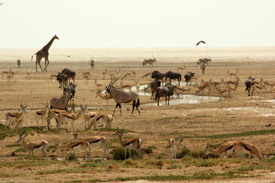 Etosha game at watering hole