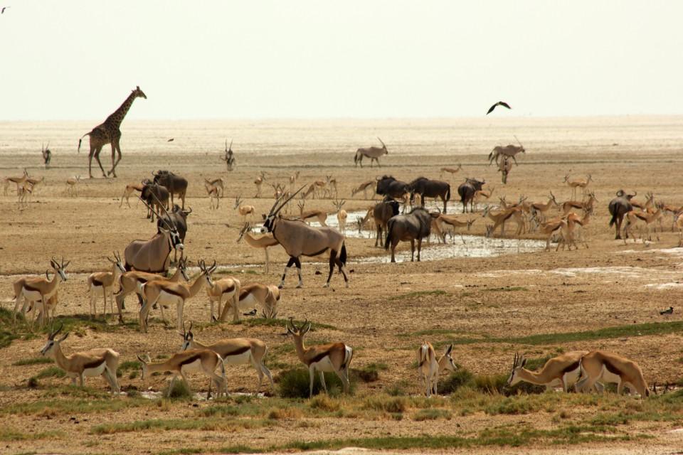 Etosha wildlife