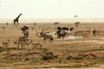 5 Day Affordable Etosha Lodge Safari